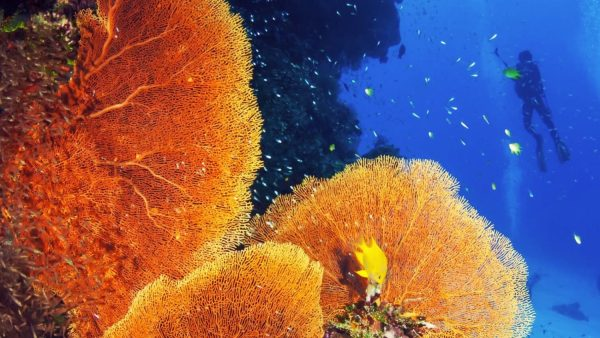 aware coral reef conservation diver